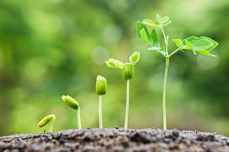 ZWAANZ | Better Living: Seeds For Africa (SAF)